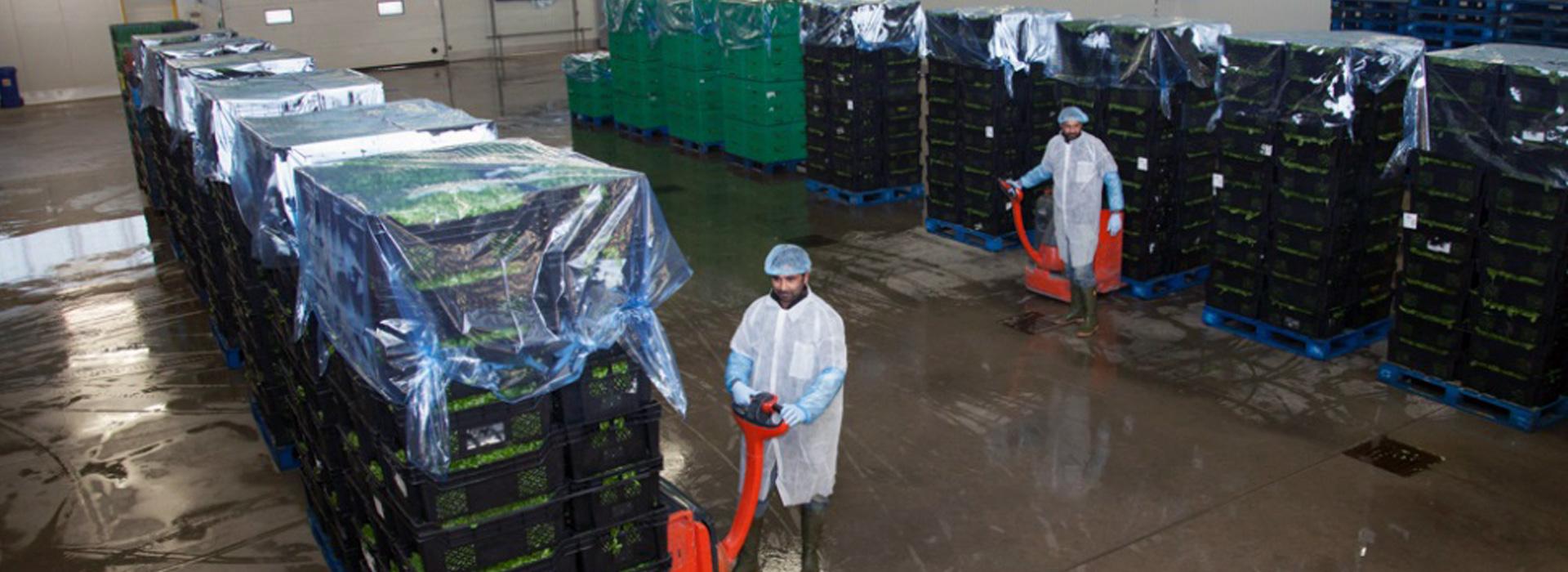 Salad distribution warehouse