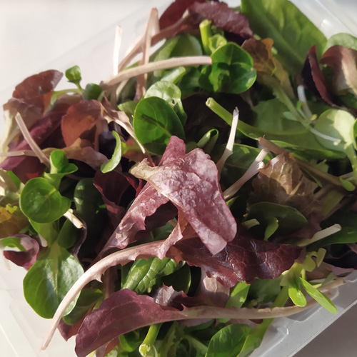 Mix salad, Baby leaf, Orticoltura Guidolini